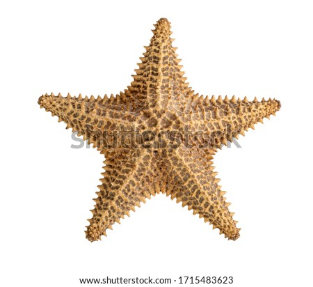 starfish brown isolated on a white background. Close-up. Side view Royalty-Free Stock Photo #1715483623
