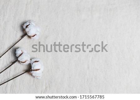 Cotton pods on on white wool-like background #1715567785