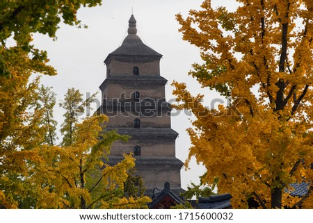 Giant Wild Goose Pagoda with foreground of autumn gingo trees, Xi'an, Shaanxi, China #1715600032
