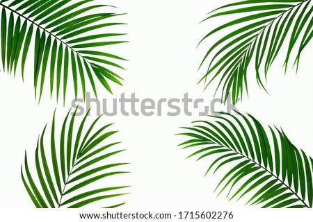 leaves of coconut isolated on white background for design elements, tropical leaf, summer background Royalty-Free Stock Photo #1715602276