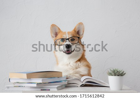 Smart funny corgi dog in glasses  sitting with books, reading and studying smiling on white background Royalty-Free Stock Photo #1715612842
