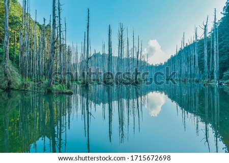 Beautiful Reflection Under Morning Sunlight at The Amazing Landslide Dam Called Water Forest (Shuiyang Forest) at Nantou, Taiwan  #1715672698