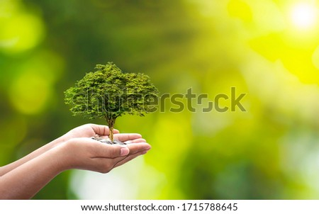 Trees are planted on coins in human hands with blurred natural backgrounds, plant growth ideas and environmentally friendly investments. #1715788645