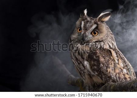 Portrait of an eared owl on a dark background with clouds of fog