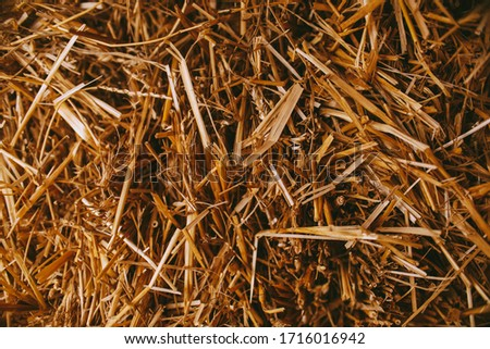 hay, closeup photo. Macro photo nature dry hay. Texture background dry Wheat Straw. Straw hay bale texture photo. vintage photo processing #1716016942