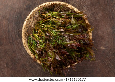 A bunch of toon leaves Royalty-Free Stock Photo #1716130177
