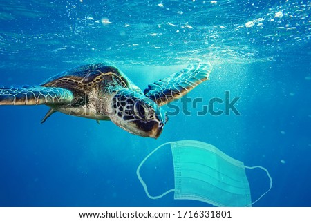 A sea turtle going to eat a surgical mask. Photo manipulation about ocean pollution and the consequences of overuse of surgical masks during coronavirus pandemic. #1716331801