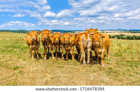 Cow herd on cow farm photo #1716478384