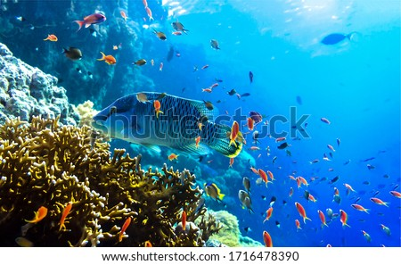 Under water coral fishes view. Under water coral fish #1716478390