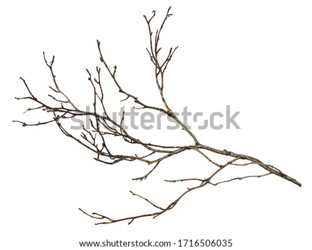 Dry twig isolated on white Royalty-Free Stock Photo #1716506035