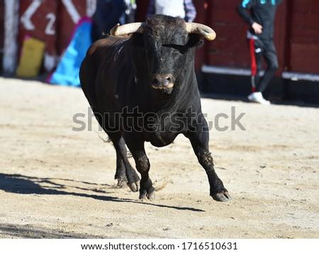 A aggressive bull with big horns on spanish bullring #1716510631