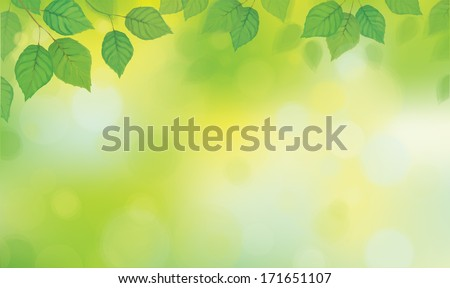 Vector green leaves  branches on sunshine background. #171651107