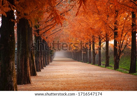 Rows of trees lining long empty park path or footpath in the autumn fall