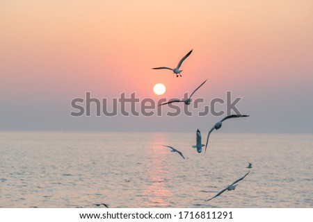 Beautiful sunset with flock of seagulls flying over the sea. Seagulls in the clouds of blue sky. Seagull flying in the blue sky. A seagull is flying in the sky. Seagull flying sky. #1716811291