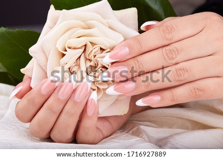 Hands with long artificial french manicured nails holding a beige rose flower
