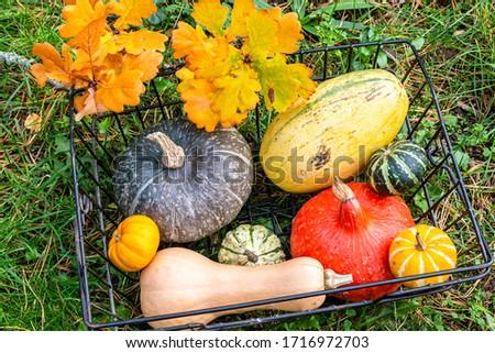 red kuri squash, butternut squash, spaghetti squash and decorative gourd in a garden #1716972703