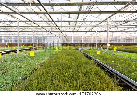 cultivation of plants in a greenhouse  #171702206