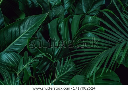 Background with dark green tropical leaves, fresh flat background. Flat lay. Nature concept #1717082524