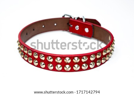 studded dog collar spiked dog collar in leather pet accessory  Royalty-Free Stock Photo #1717142794