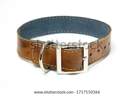 dog collar in leather pet accessory  Royalty-Free Stock Photo #1717150366