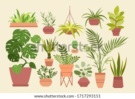 Plant in pot vector illustration set, cartoon flat different indoor potted decorative house plants for interior home or office decoration isolated. Hygge and scandinavian design plants in pots #1717293151
