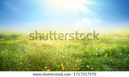 Beautiful meadow field with fresh grass and yellow dandelion flowers in nature against a blurry blue sky with clouds. Summer spring natural landscape. Royalty-Free Stock Photo #1717317970