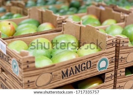 Fresh raw organic uncooked mango tropical fruit in box for sale at market. Vegan food and healthy nutrition concept. Stock photo green mango on market background.
