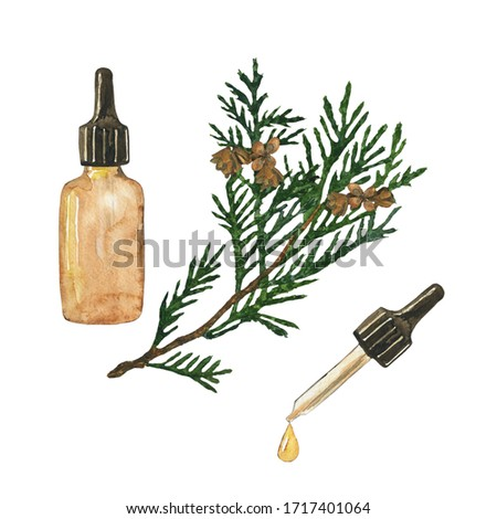 Essential oil of cypress or thuja in glass brown bottle isolated on white background. Watercolor hand drawing illustration. Clip art for medicine, healthy food, covers, cards.