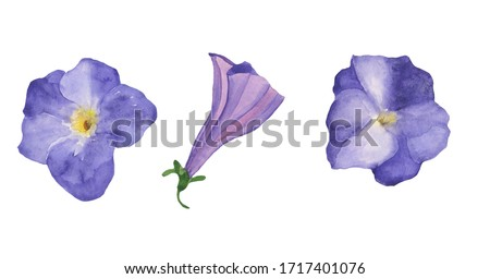 Watercolor set of three flowers of vilet petunia isolated on white background. Hand drawing floral illustration. Perfect for greeting or wedding card, decoration, print, summer design. Clip art.
