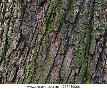 Natural pear tree bark. Abstract background. Tree bark. Close-up view of the bark of a European pear tree. Trunk texture. #1717450006