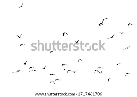 White flock of birds flying #1717461706