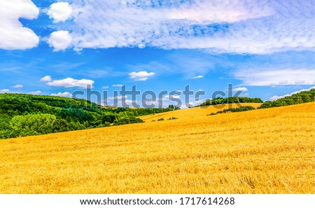 Wheat field mountain summit landscape. Wheat field landscape. Summer wheat field agriculture #1717614268