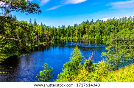 Forest lake water summer landscape. Lake in forest. Forest lake view #1717614343
