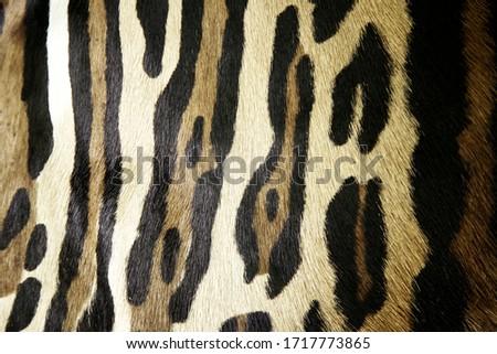 Wild leopard skin, animal hair detail, cruelty