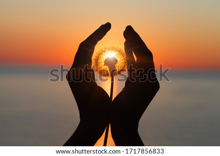 dandelion flower in young woman's hands at sunset or sunrise light, sea water landscape, spiritual, meditation, soul, harmony concept