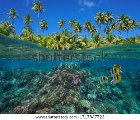 Coral reef with tropical fish underwater and green foliage of coconut palm trees, split view over and under water surface, French Polynesia, Pacific ocean, Oceania #1717867723