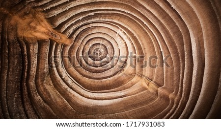 Wood larch texture of cut tree trunk, close-up. Stump wood. Macro shot. Royalty-Free Stock Photo #1717931083