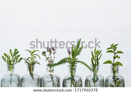 Bottle of essential oil with herbs  sage, rosemary, oregano,lavender flower, Rue herb  ,thyme  set up on white background. #1717960378