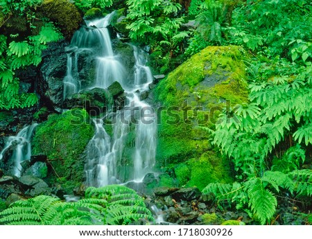 Little Redwood Creek Falls is surrounded by lush foliage and ferns in Siskiyou National Forest in Brookings, Oregon. Royalty-Free Stock Photo #1718030926