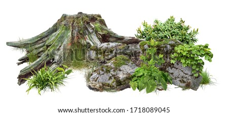 Cut out tree stump. Mossy tree roots. Old tree stub surrounded by green foliage. Dead tree isolated on white background. High quality clipping mask. #1718089045
