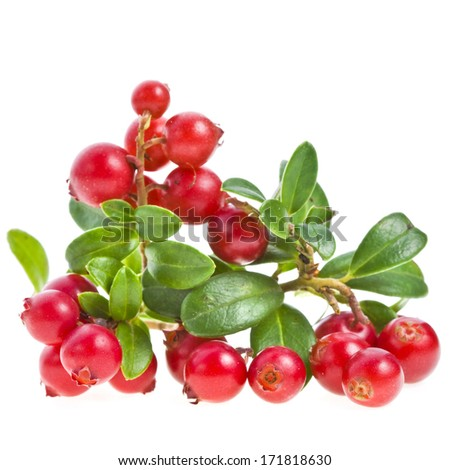 Cowberries heap  close up isolated on white background #171818630