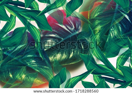 Colorful bright flower monstera. Natural floral background. Flower stalk and leaves. #1718288560
