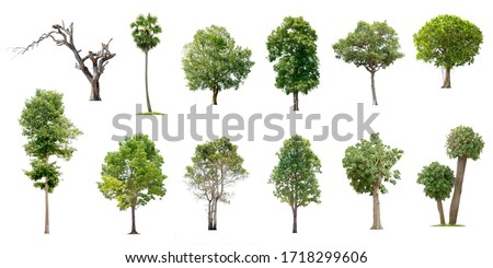 Isolated trees on white background , The collection of trees. #1718299606
