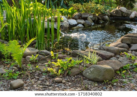 Small garden pond with stone shores and many decorative evergreens. Selective focus. Evergreen spring landscape garden. In foreground ostrich fern. Nature concept for design. #1718340802
