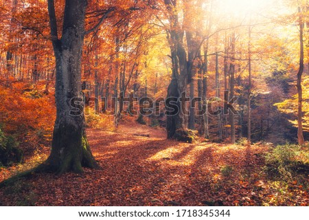 Autumn forest nature. Vivid morning in colorful forest with sun rays through branches of trees. Scenery of nature with sunlight #1718345344
