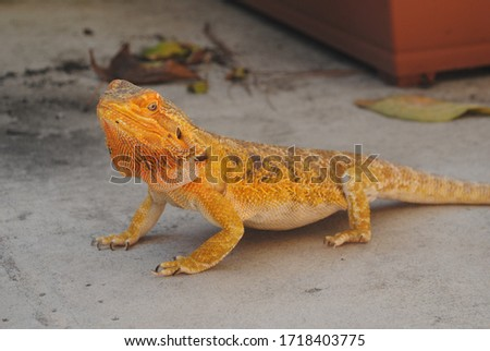 A beautiful picture of a yellow wild lizard