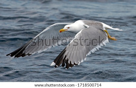 Seagull outdoor sea fly freedom Royalty-Free Stock Photo #1718500714
