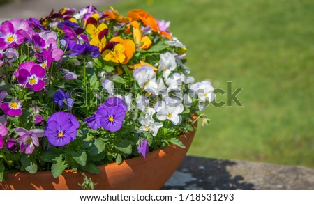 Bouquet of mixed pansies bright spring flowers with border for copy space. #1718531293