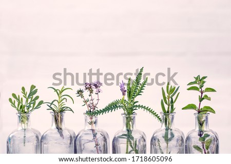 Bottle of essential oil with herbs  oregano, rosemary, lavender flower, Rue herb ,thyme  set up on white background. #1718605096