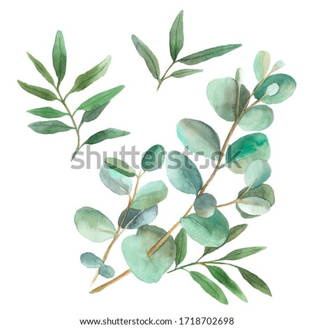 Watercolor plants. Hand painted floral clip art: branches isolated on white background.